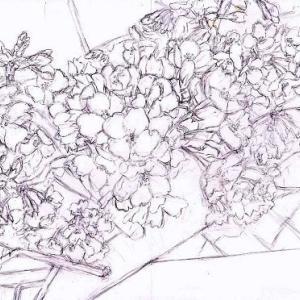 途中経過1 下描き1(川沿いの桜)