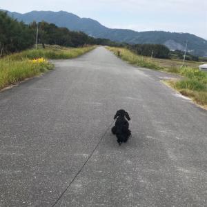 ランランお散歩 ♪