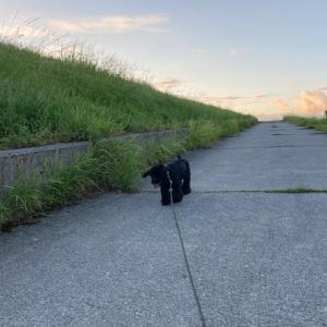 夕散歩は別々