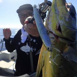最近の釣り(クロダイ、シイラ、シーバス、タコ)