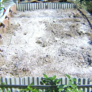 カリフラワー畝作りと植付防虫対策