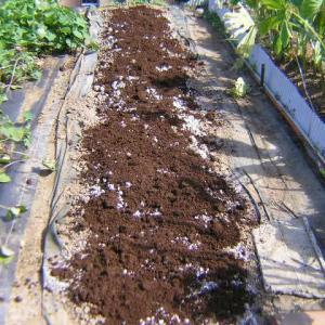 そら豆の畝作りをした