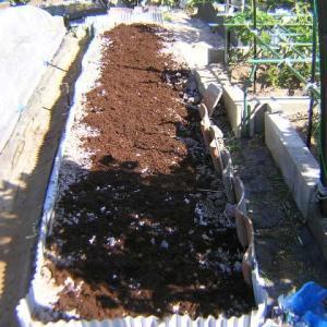 実豌豆(グリンピース)発芽と畝作り支柱笹竹設置