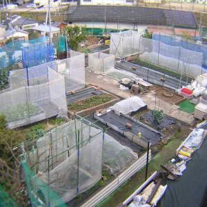 第1菜園の様子暴風対策