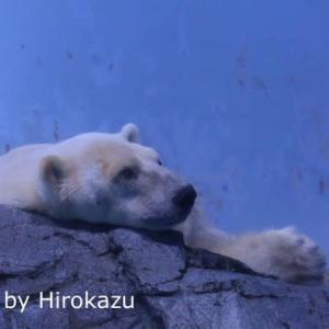 おやつタイムを待つユキ丸君♪(9月16日)