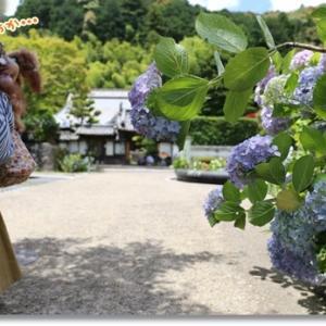 可愛い看板ワンコさんのいるお寺さん♪ ~紫陽花がキレイなお寺さんへ③~