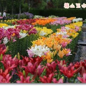キレイに咲いたお花を見ながらお散歩♪ ~朝活してお出掛け②~