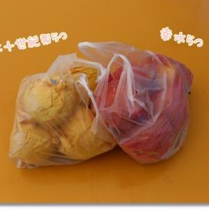 もぎ取ったばかりの梨を食べてみよう♪ ~ぷぅちゃん犬生2回目のフルーツ狩りへ②~