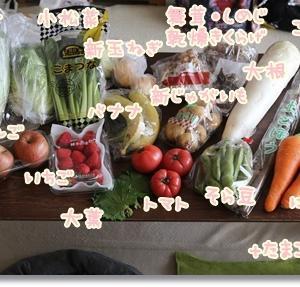 ドライブスルー八百屋さんで購入したお野菜を使った夜ご飯♪