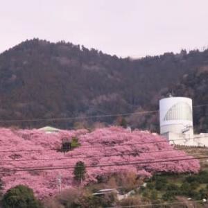 第22回 まつだ桜まつり