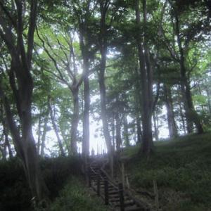 朝ラン~茅ヶ崎市民の森・清水谷戸