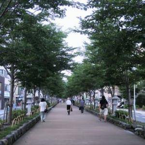 鶴岡八幡宮ぼんぼり祭り