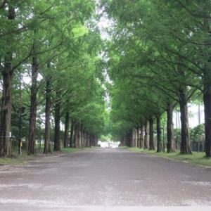 平塚総合公園散歩