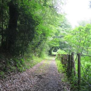 ぶらりJog~遠藤笹窪谷(健康の森)