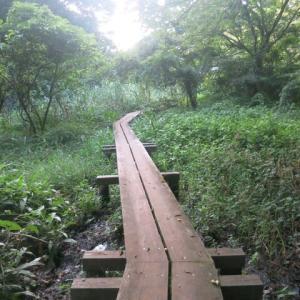 ぶら散歩~茅ヶ崎清水谷戸・市民の森