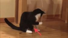 猫♪臍ヘルニア 手術跡は痛々しい