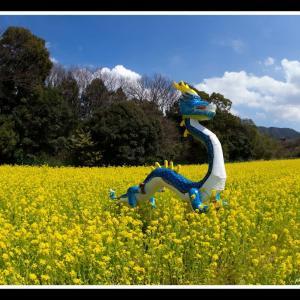 菜の花畑と青龍