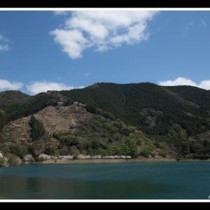 舟郡ダムの桜