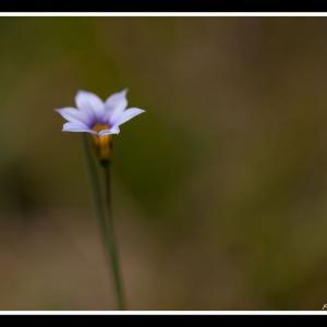 権現山で見つけた花々