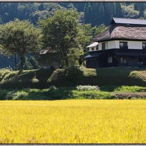 茅葺きの家と黄金色の田んぼ