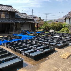 栃木県で活躍する「めだかの箱庭」の島田さん