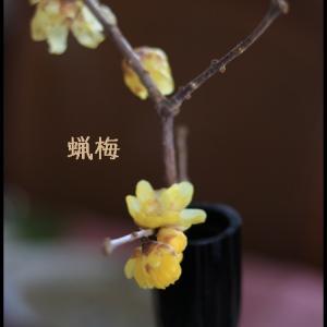 節分のおもてなしのお花には雪中四花☆