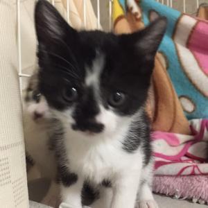 今日は子猫の動画〜