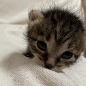 子猫7匹〜
