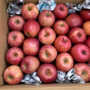 NO804・・・地のグッズとリンゴ