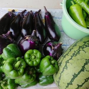 自家製お野菜消費が忙しい・・・簡単おうちごはん&トウモロコシ♪