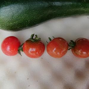 薄皮ミニトマトの収穫スタート・・・今日の節約お弁当~♪