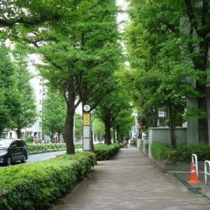 緑あふれる街 白金台 プラチナ通り (東京港区)