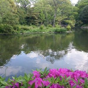 五月の有栖川宮記念公園  (東京 広尾)