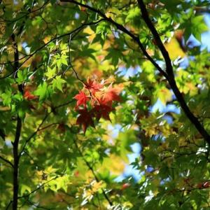 秋、旅へ①