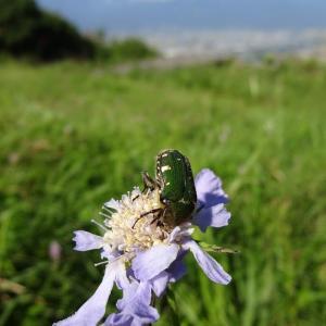【長峰山】 花と虫 9月号 ~下界を見下ろしながら~
