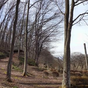 けやきの森自然園で 辛うじて福寿草