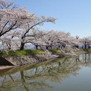 千曲の春 2020 (1) ~治田公園