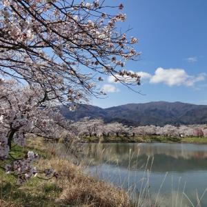 千曲の春 2020 (2) ~治田公園 その2