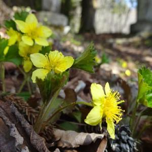 5月初めの陣場平山◆道すがら Botanical Portraits