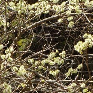 5月初めの陣場平山◆道すがら Botanical Portraits (2) @長野県道86号戸隠篠ノ井線