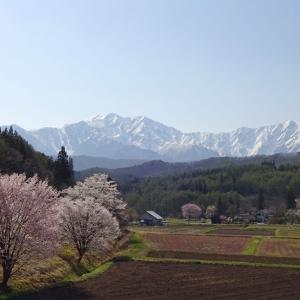 春景色 2020 (14) 長野県道31号長野大町線~その2~