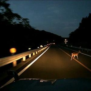 ヒヤリハット報告◆危ないよバンビ
