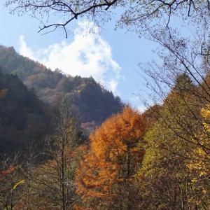 【林道烏川線】紅葉と渓流と天道虫