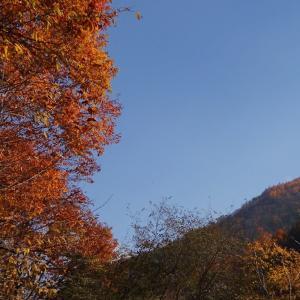 【林道烏川線】紅葉のピークは過ぎていたけど 帰り道はきれいだった