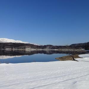 2月の晴れた日の ~ 青木湖一本桜