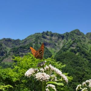 【品沢高原】 花と虫 7月号 ~ヒヨドリバナとエトセトラ~