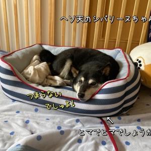 http://chibadojo3.blog.fc2.com/blog-entry-1809.html
