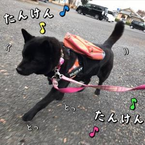 探検隊シリーズ「うちら元気な探検隊っ!」