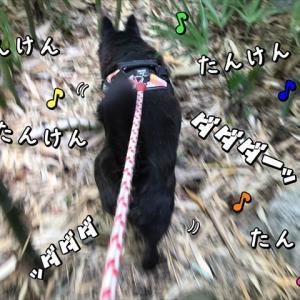 探検隊シリーズ「うちら 突進する探検隊!」
