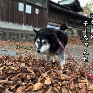 日本犬の似合う風景